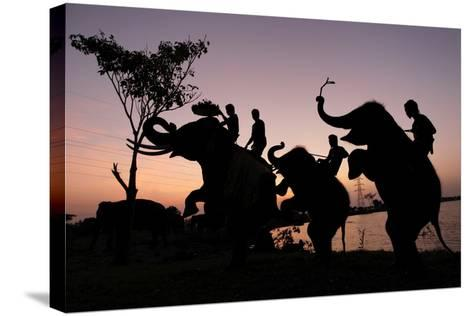 Silhouette of Thai Mahouts and Elephants with One on the Left Holding Krathong-Rungroj Yongrit-Stretched Canvas Print
