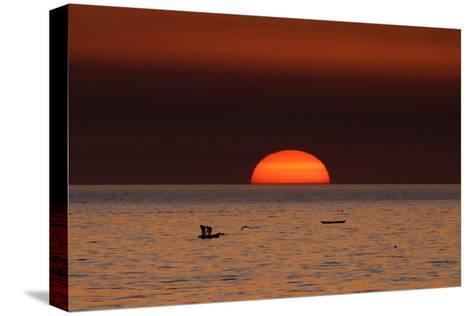 Fishermen Lay their Nets in the Sea as the Sun Sets-Mohammed Saber-Stretched Canvas Print