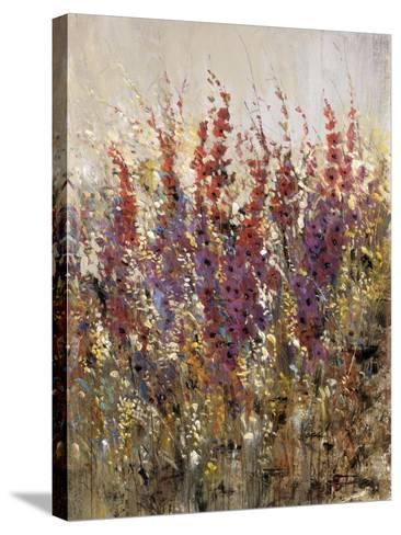 Along the Path III-Tim O'toole-Stretched Canvas Print
