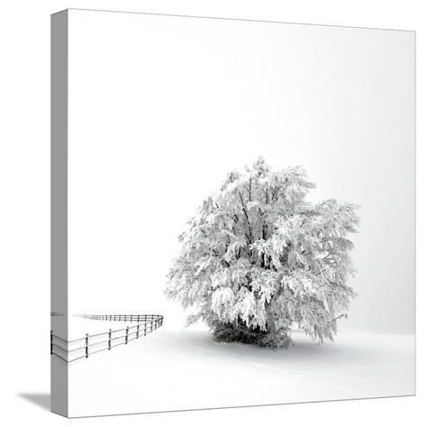 White is back-Philippe Sainte-Laudy-Stretched Canvas Print