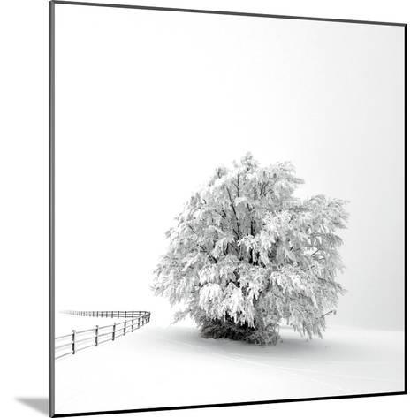 White is back-Philippe Sainte-Laudy-Mounted Photographic Print