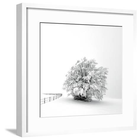 White is back-Philippe Sainte-Laudy-Framed Art Print