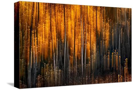 Falling Stars-Ursula Abresch-Stretched Canvas Print