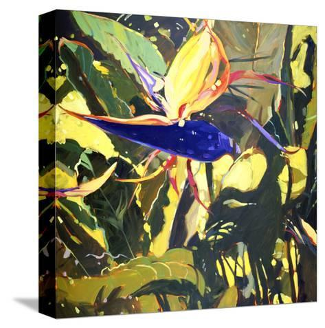 Bird of Paradise-Darrell Hill-Stretched Canvas Print