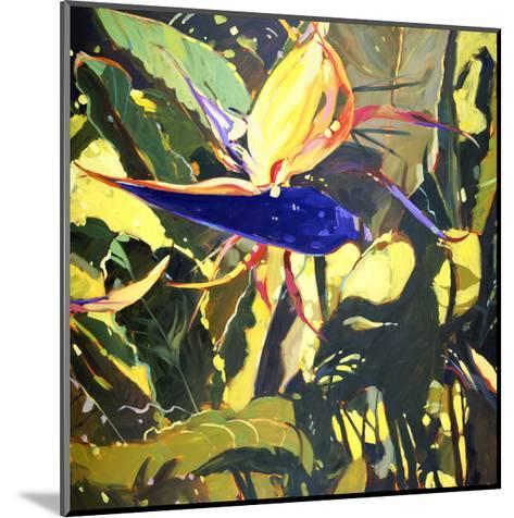 Bird of Paradise-Darrell Hill-Mounted Premium Giclee Print