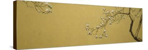 Magnolia-Joseph Jackino-Stretched Canvas Print