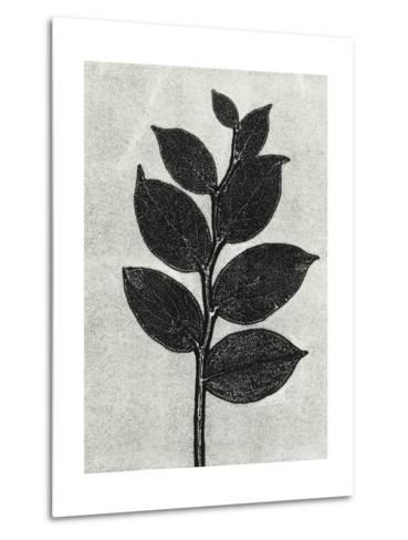 New Salal 1-Mary Margaret Briggs-Metal Print