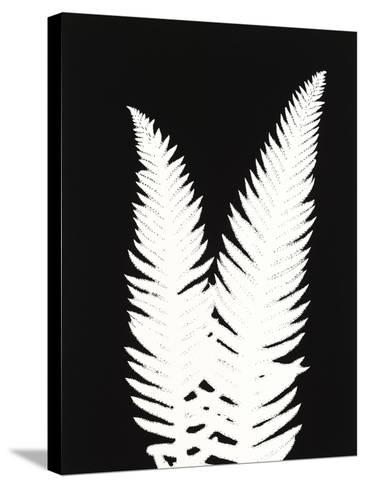 New Fern 9-Mary Margaret Briggs-Stretched Canvas Print
