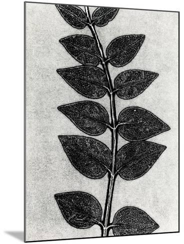 New Vines 4-Mary Margaret Briggs-Mounted Premium Giclee Print