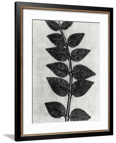 New Vines 4-Mary Margaret Briggs-Framed Art Print