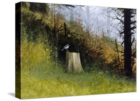 Bluebird-Miguel Dominguez-Stretched Canvas Print