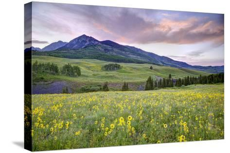 USA, Colorado, Crested Butte. Landscape of wildflowers and mountain.-Dennis Flaherty-Stretched Canvas Print