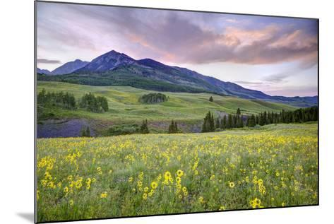 USA, Colorado, Crested Butte. Landscape of wildflowers and mountain.-Dennis Flaherty-Mounted Photographic Print