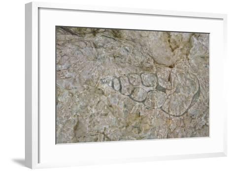 Canada, Nunavut, Akpatok Island, Qikiqtaaluk, fossilized creatures.-Cindy Miller Hopkins-Framed Art Print