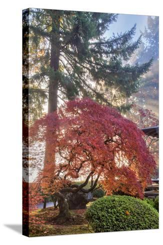Japanese Gardens in autumn in Portland, Oregon, USA-Chuck Haney-Stretched Canvas Print