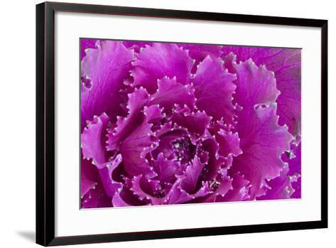USA, Georgia, Savannah, Fancy leaf cabbage.-Joanne Wells-Framed Art Print