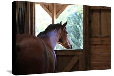 Horse in stall in rural Rappahannock County, Virginia, USA-Dennis Brack-Stretched Canvas Print