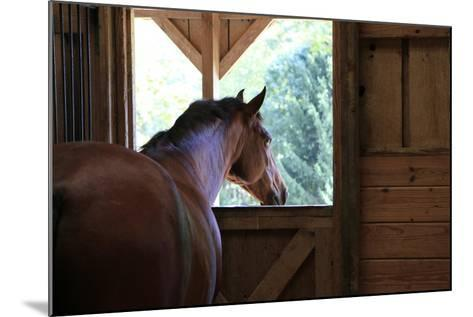 Horse in stall in rural Rappahannock County, Virginia, USA-Dennis Brack-Mounted Photographic Print