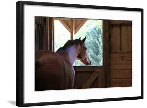 Horse in stall in rural Rappahannock County, Virginia, USA-Dennis Brack-Framed Art Print