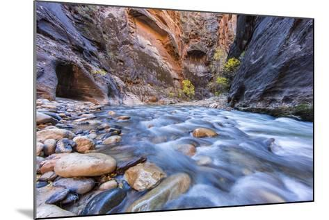 The Narrows of the Virgin River in autumn in Zion NP, Utah, USA-Chuck Haney-Mounted Photographic Print