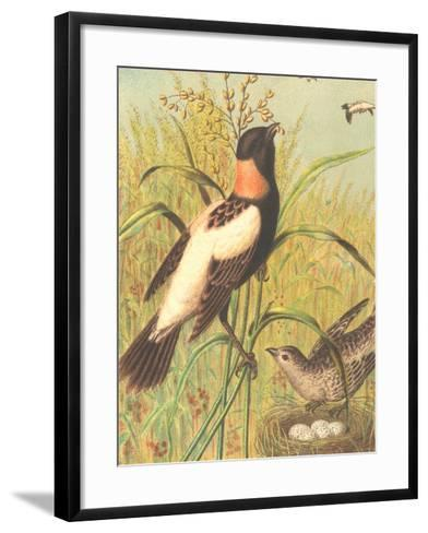 Male and Female Longspurs--Framed Art Print