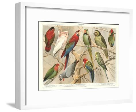 The Parrot Family--Framed Art Print