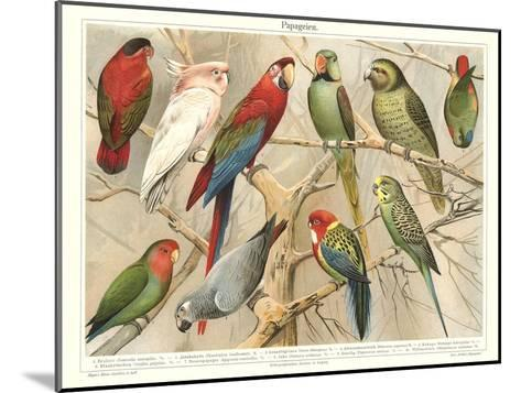 The Parrot Family--Mounted Art Print