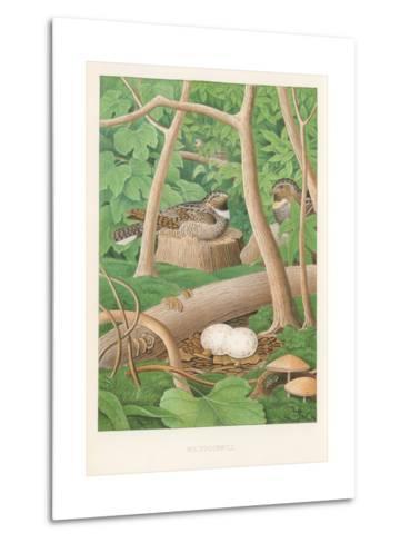 Whipporwills, Eggs--Metal Print