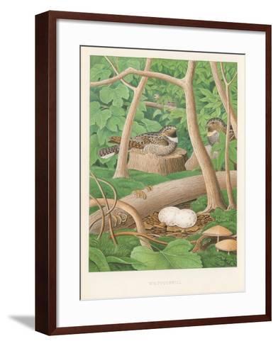 Whipporwills, Eggs--Framed Art Print