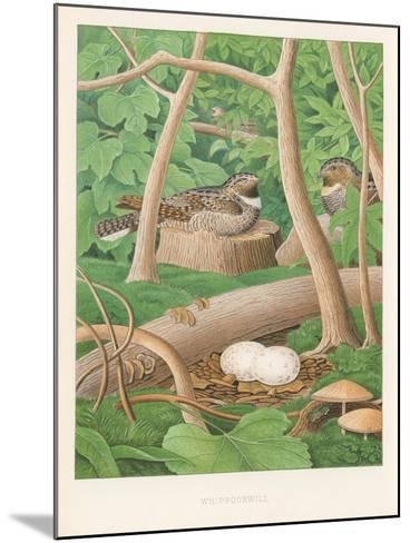 Whipporwills, Eggs--Mounted Art Print