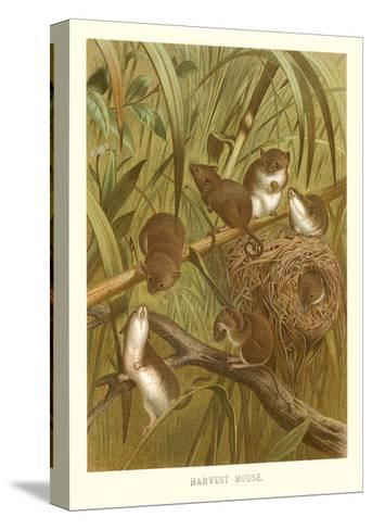 Harvest Mice--Stretched Canvas Print