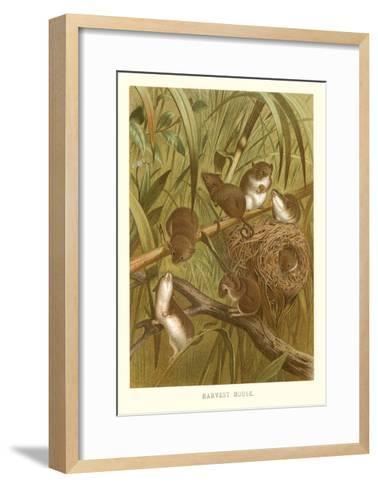 Harvest Mice--Framed Art Print