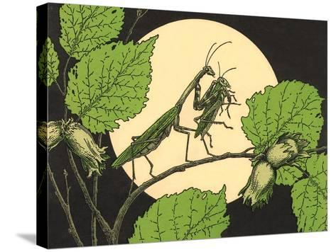 Praying Mantis with Grasshopper--Stretched Canvas Print