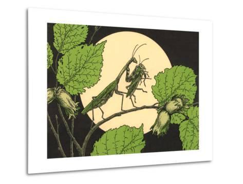 Praying Mantis with Grasshopper--Metal Print