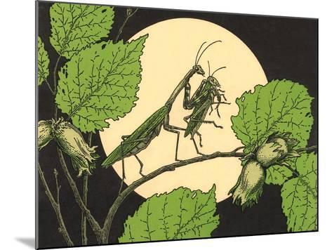 Praying Mantis with Grasshopper--Mounted Art Print