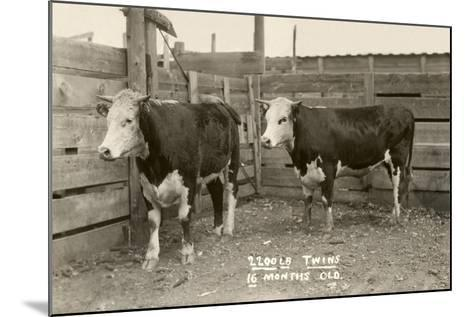 White-Faced Hereford Steer Twins--Mounted Art Print