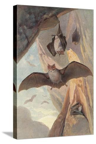 Bats in Cave--Stretched Canvas Print