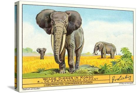 Elephants in the Congo--Stretched Canvas Print