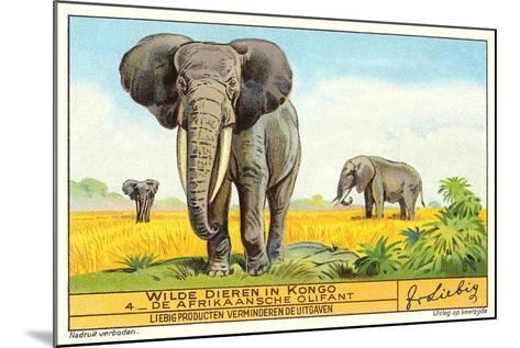 Elephants in the Congo--Mounted Art Print