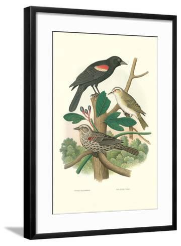 Red-Eyed Vireo, Red Wing Blackbird--Framed Art Print