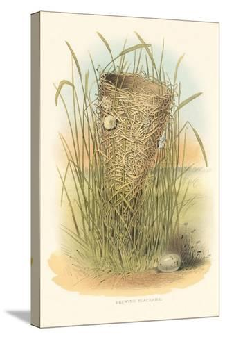 Redwing Blackbird Nest and Eggs--Stretched Canvas Print