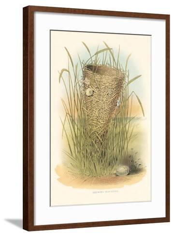 Redwing Blackbird Nest and Eggs--Framed Art Print