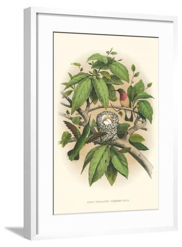Ruby-Throated Hummingbird Nest and Eggs--Framed Art Print