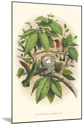 Ruby-Throated Hummingbird Nest and Eggs--Mounted Art Print