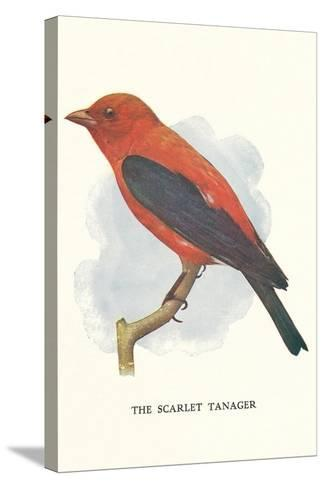 Scarlet Tanager--Stretched Canvas Print