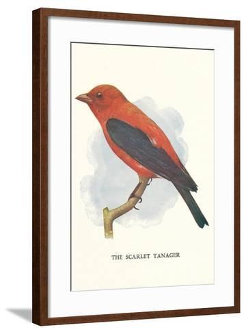 Scarlet Tanager--Framed Art Print
