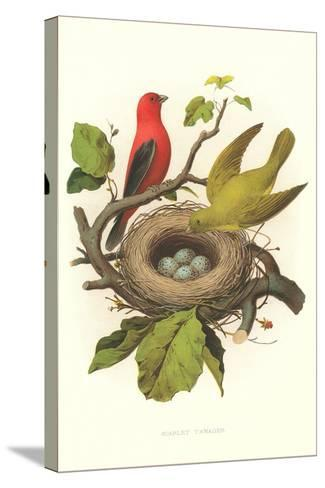 Scarlet Tanager Nest and Eggs--Stretched Canvas Print
