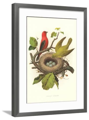Scarlet Tanager Nest and Eggs--Framed Art Print