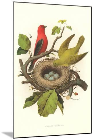 Scarlet Tanager Nest and Eggs--Mounted Art Print