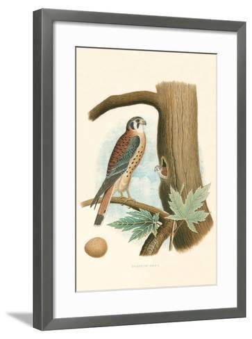 Sparrow Hawk and Egg--Framed Art Print